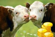 В Татарстане ввели фермерскую криптовалюту