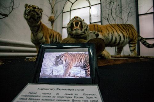 Видеоэтикетки в Амурском областном музее